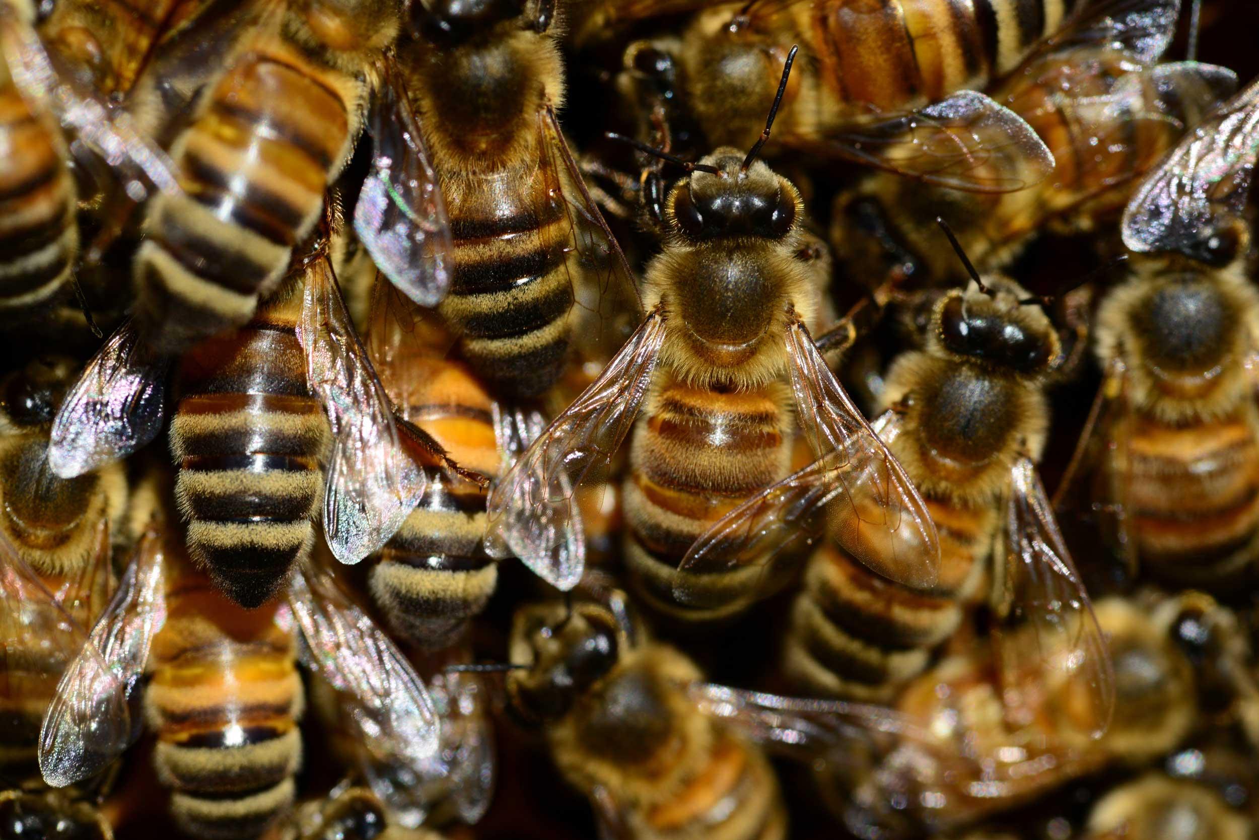 HTS Bees