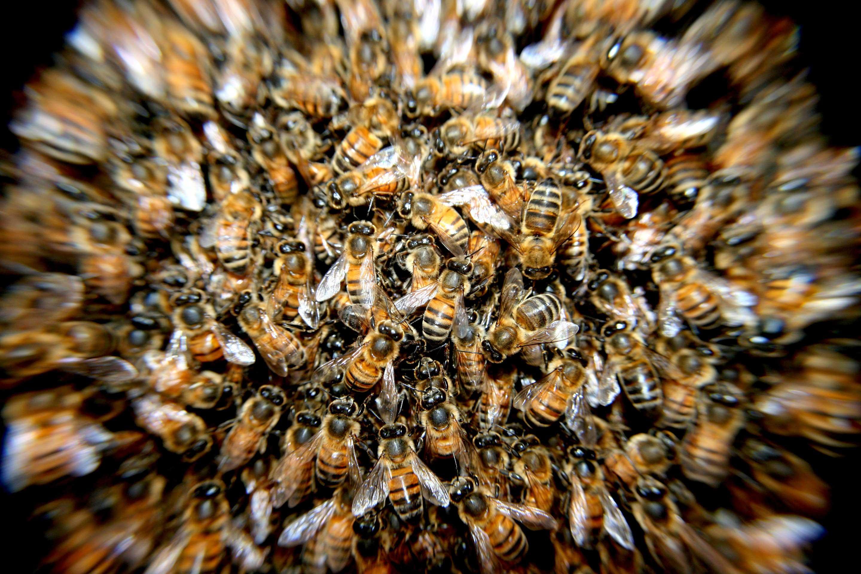 HTS Bees Tucson
